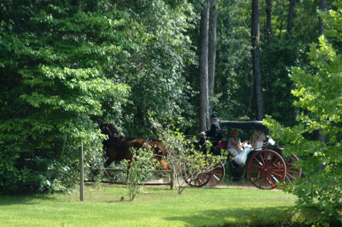 Horse and buggy move